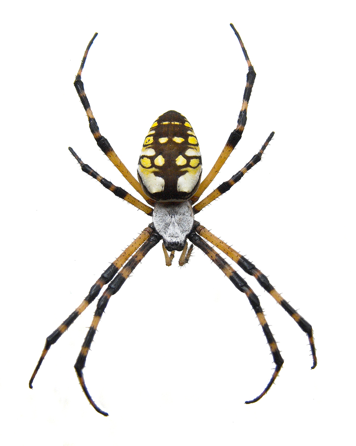 spider season she may be daft